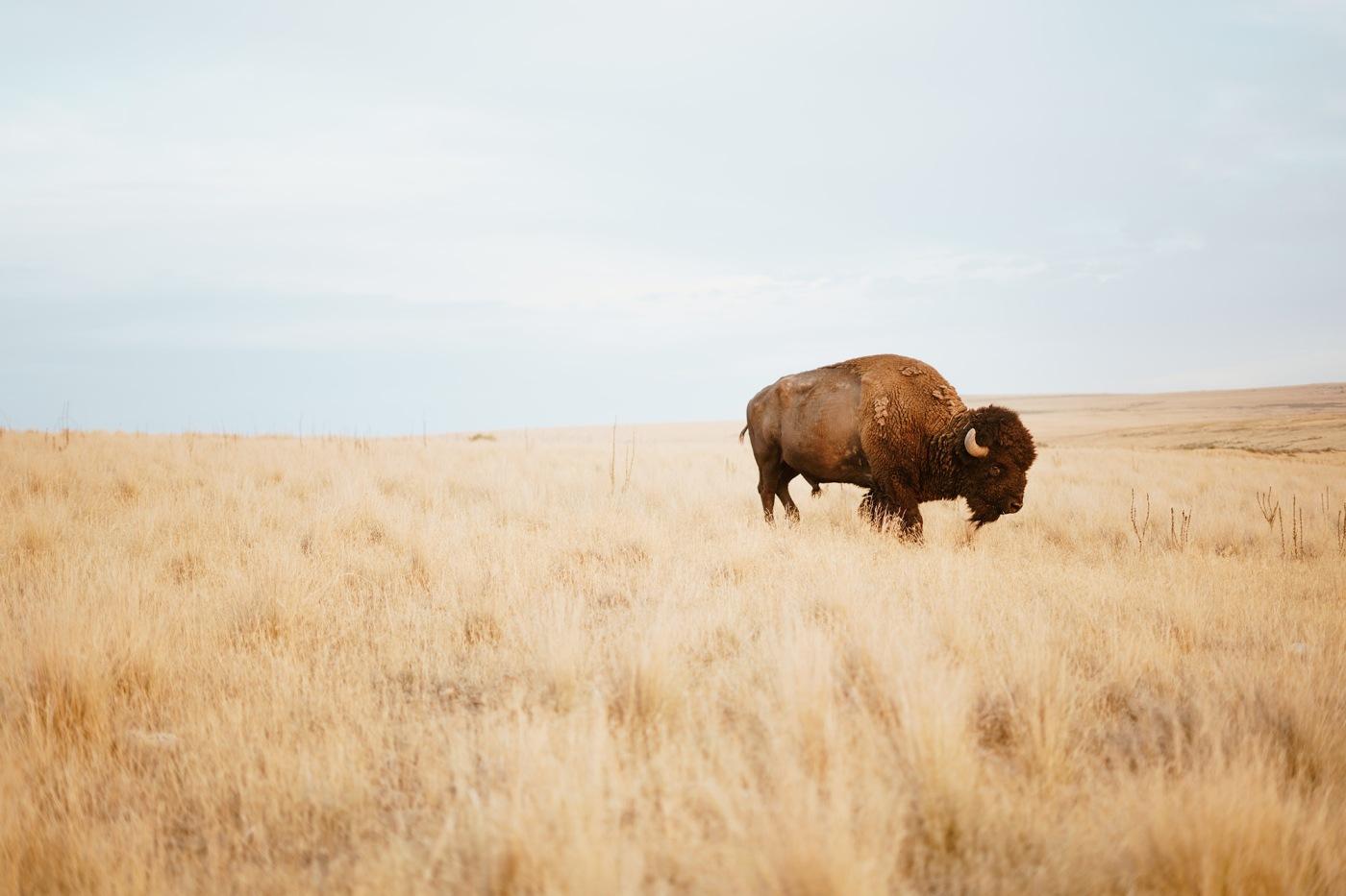 Prairie Grassland Habitat and animals