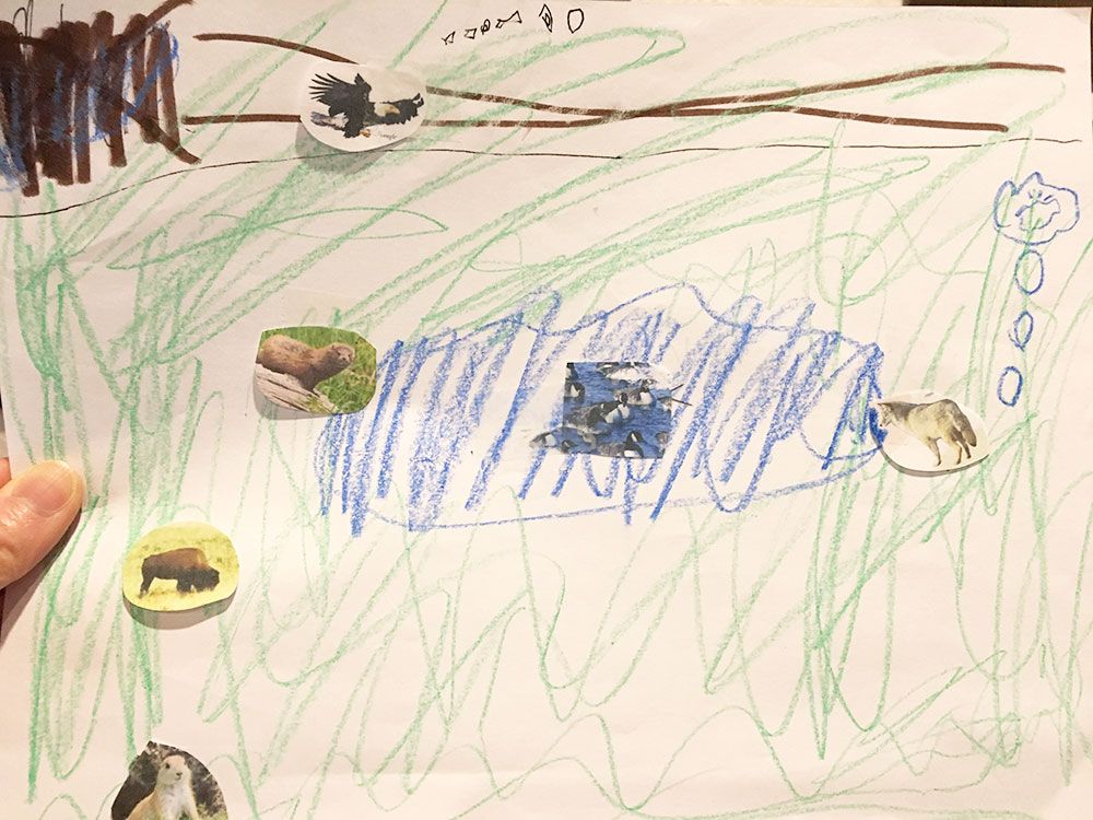 Habitats: Grassland (Prairie) - Learning idea scenery and animals drawing
