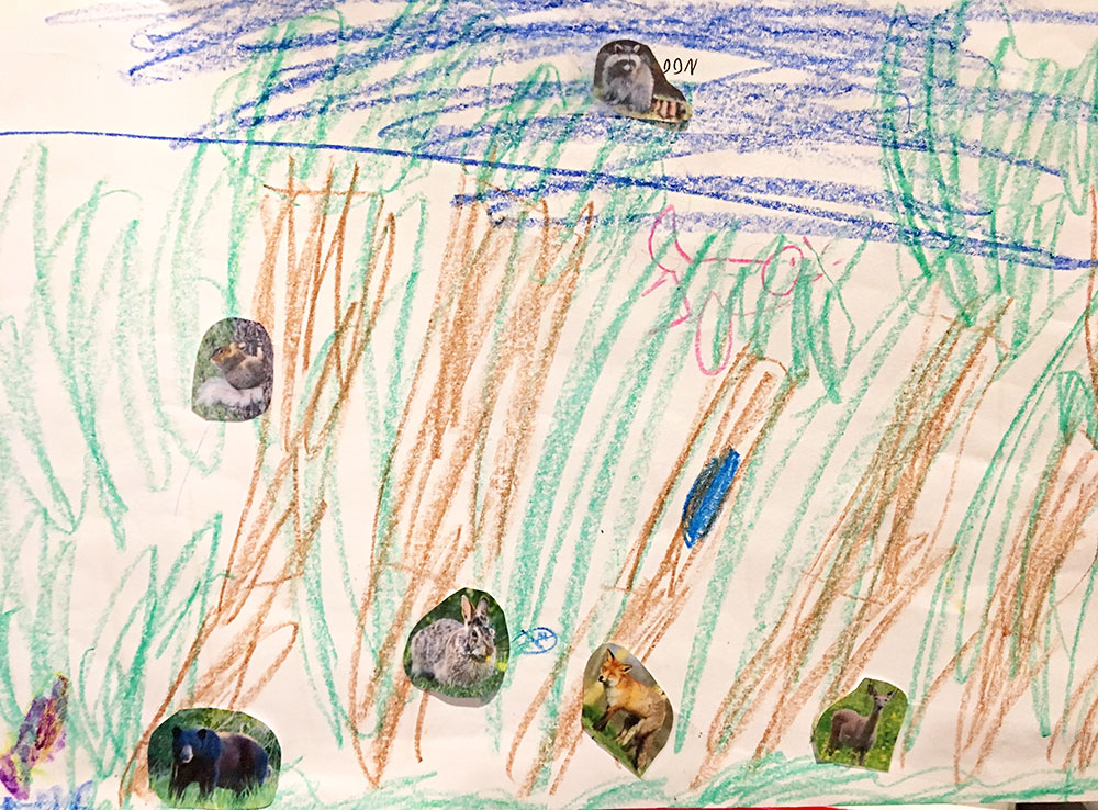 Habitats: Temperate Forest - Learning idea scenery and animals drawing