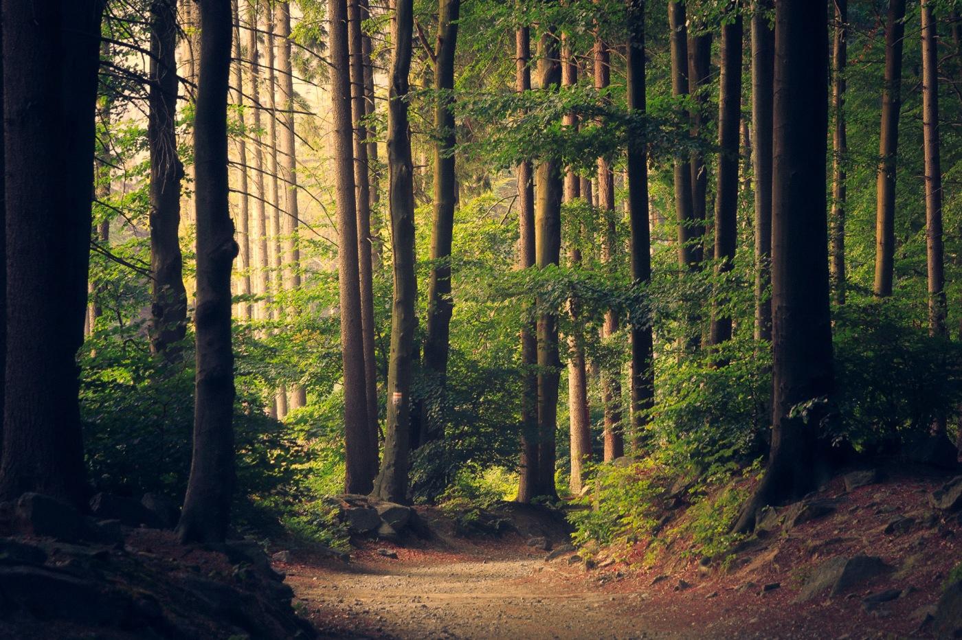 Temperate Forest Habitat and animals