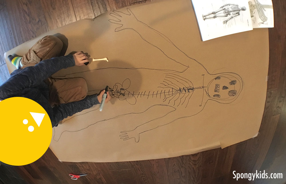 Body Tracing (Drawing bones) Learning about the Human Body with Kids