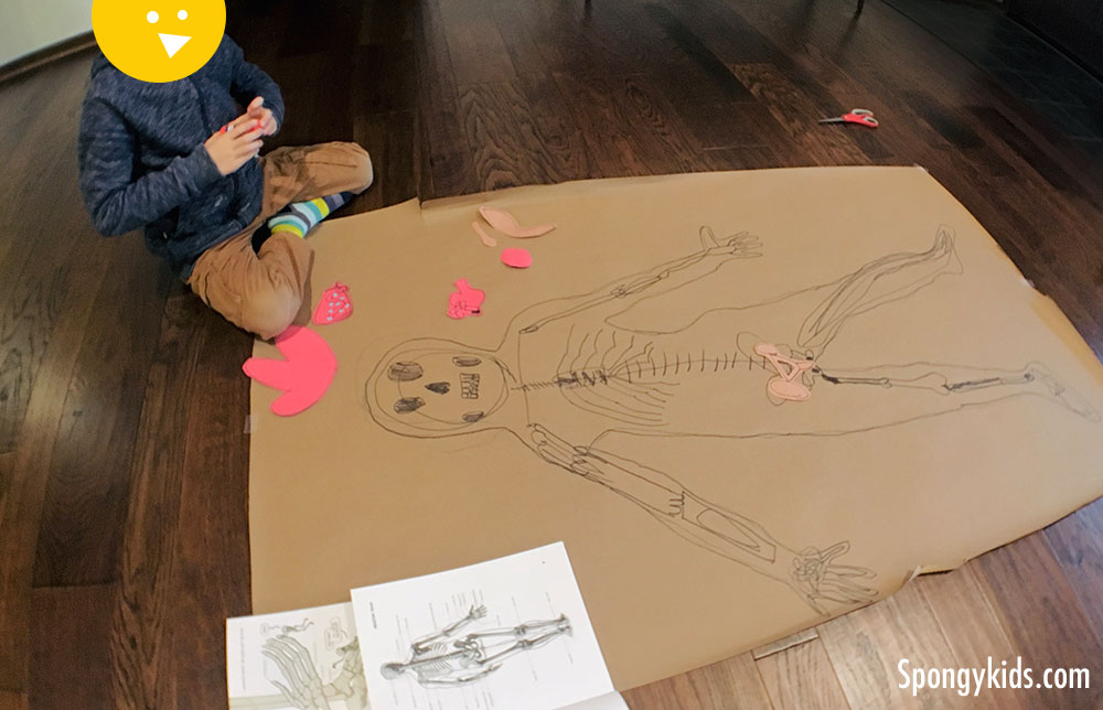Body Tracing (Placing the organs) Learning about the Human Body with Kids