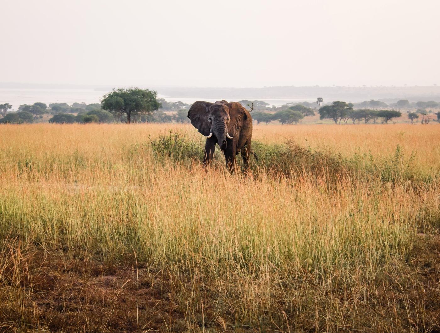Savanna Grassland Habitat and animals