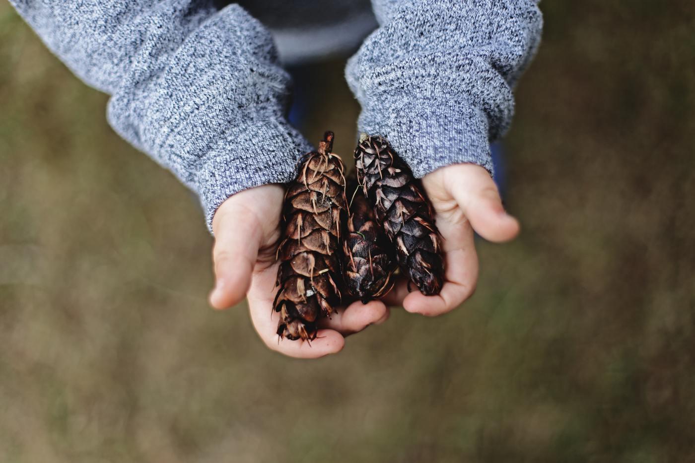 Pinecones in kids hands