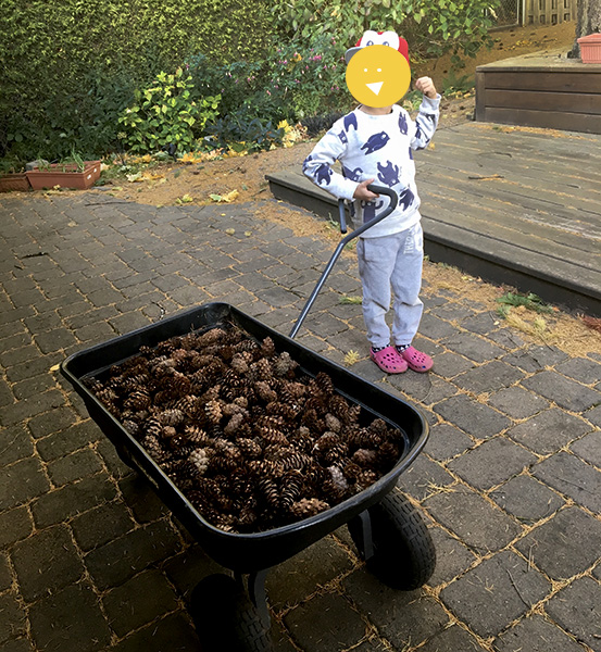 Chore Ideas for Kids: Picking up Pinecones