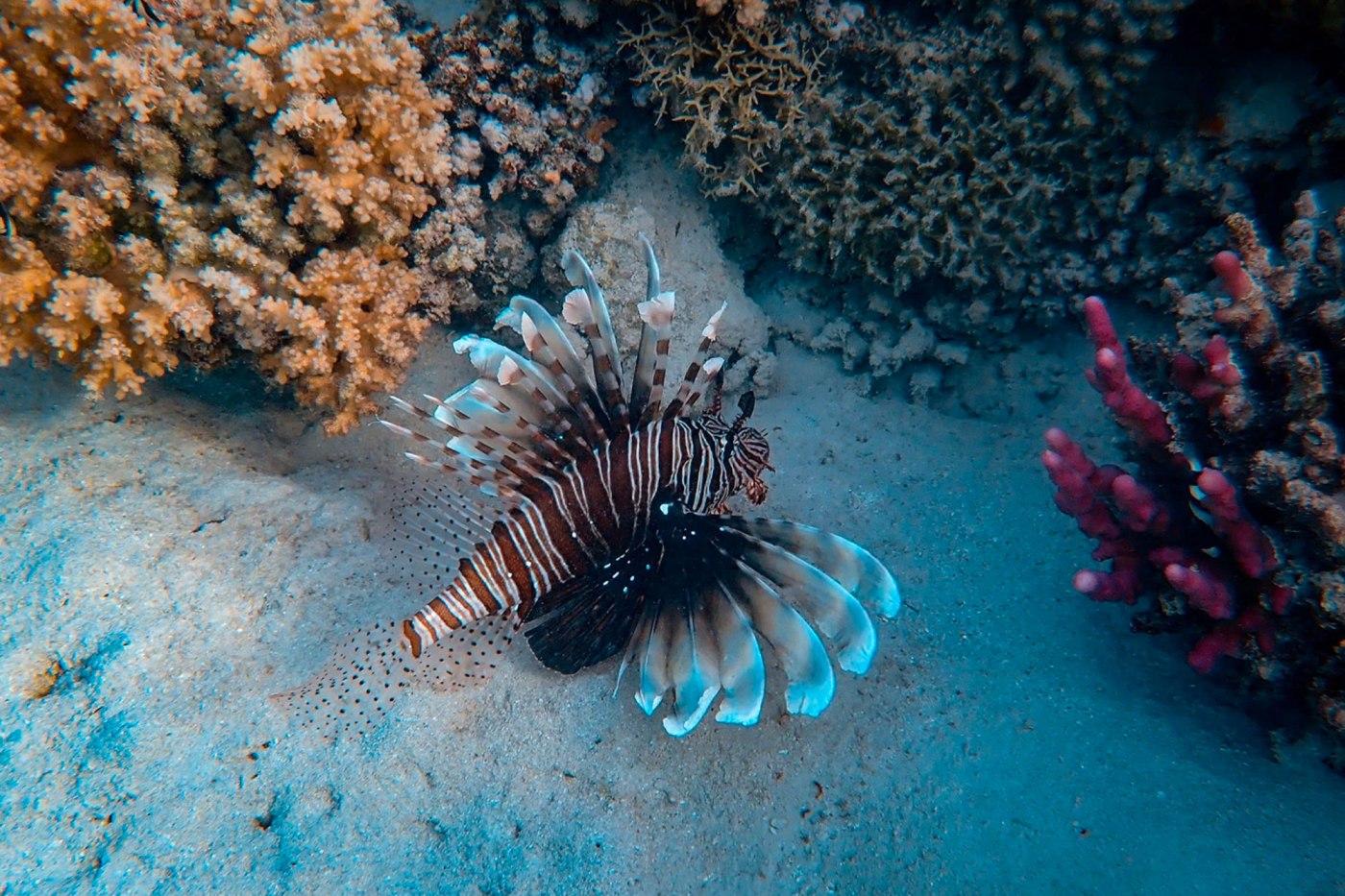 Animal Habitats For Kids – Ocean Habitat