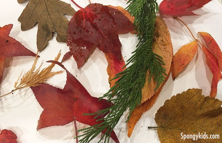 What we saw in November 2018. Many colorful leaves